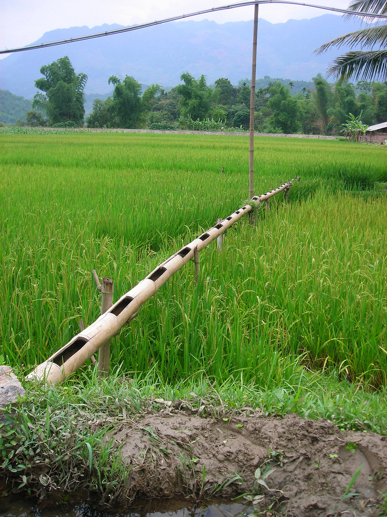 irrigation with bamboo
